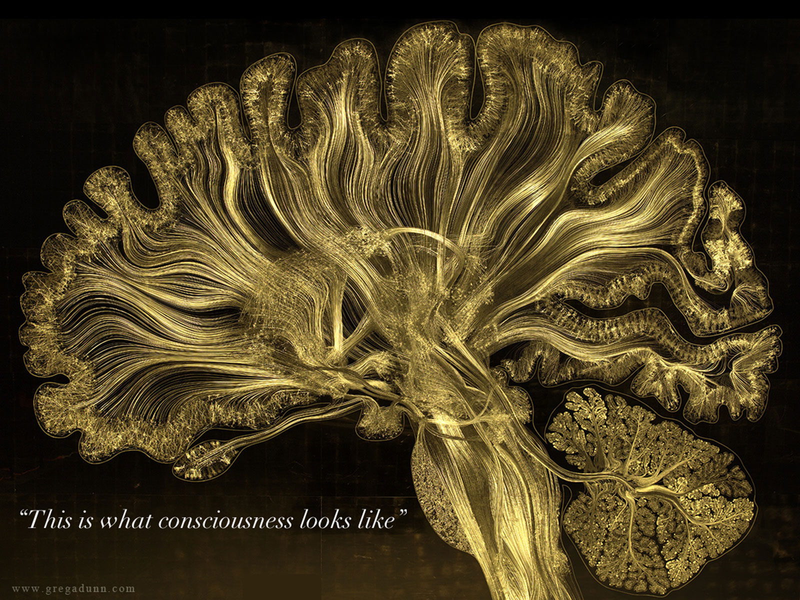 Image what-consciousness-looks-like